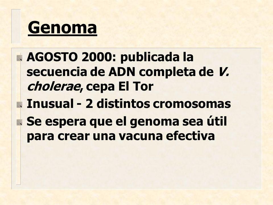 AGOSTO 2000: publicada la secuencia de ADN completa de V. cholerae, cepa El Tor Inusual - 2 distintos cromosomas Se espera que el genoma sea útil para