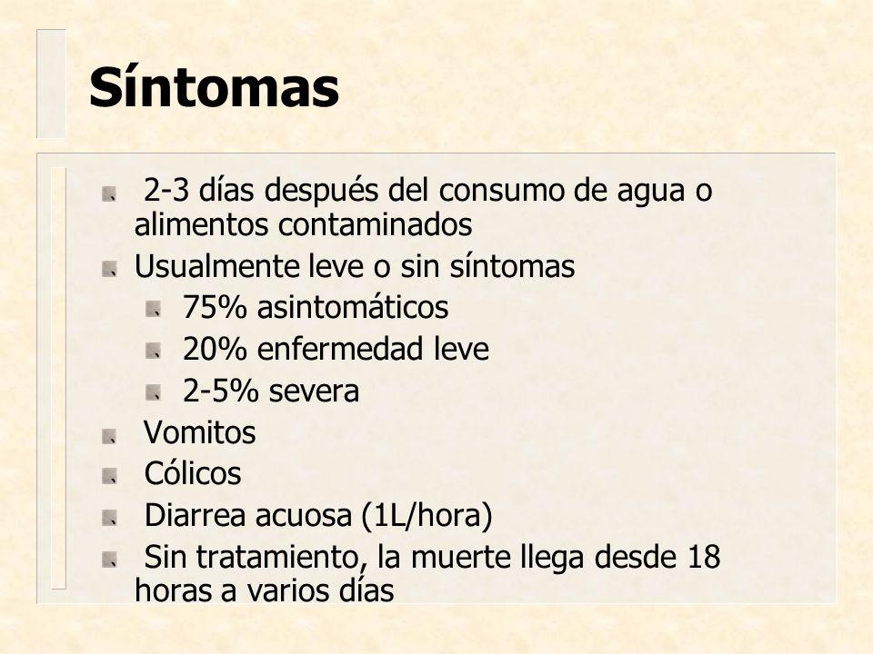 Síntomas 2-3 días después del consumo de agua o alimentos contaminados Usualmente leve o sin síntomas 75% asintomáticos 20% enfermedad leve 2-5% sever