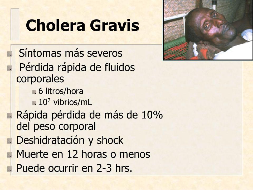 Cholera Gravis Síntomas más severos Pérdida rápida de fluidos corporales 6 litros/hora 10 7 vibrios/mL Rápida pérdida de más de 10% del peso corporal