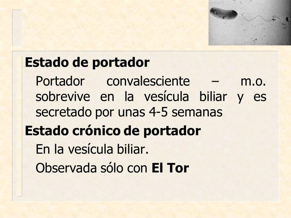 Estado de portador Portador convalesciente – m.o. sobrevive en la vesícula biliar y es secretado por unas 4-5 semanas Estado crónico de portador En la