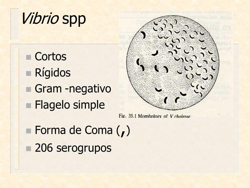 Vibrio spp n Cortos n Rígidos n Gram -negativo n Flagelo simple n Forma de Coma (, ) n 206 serogrupos