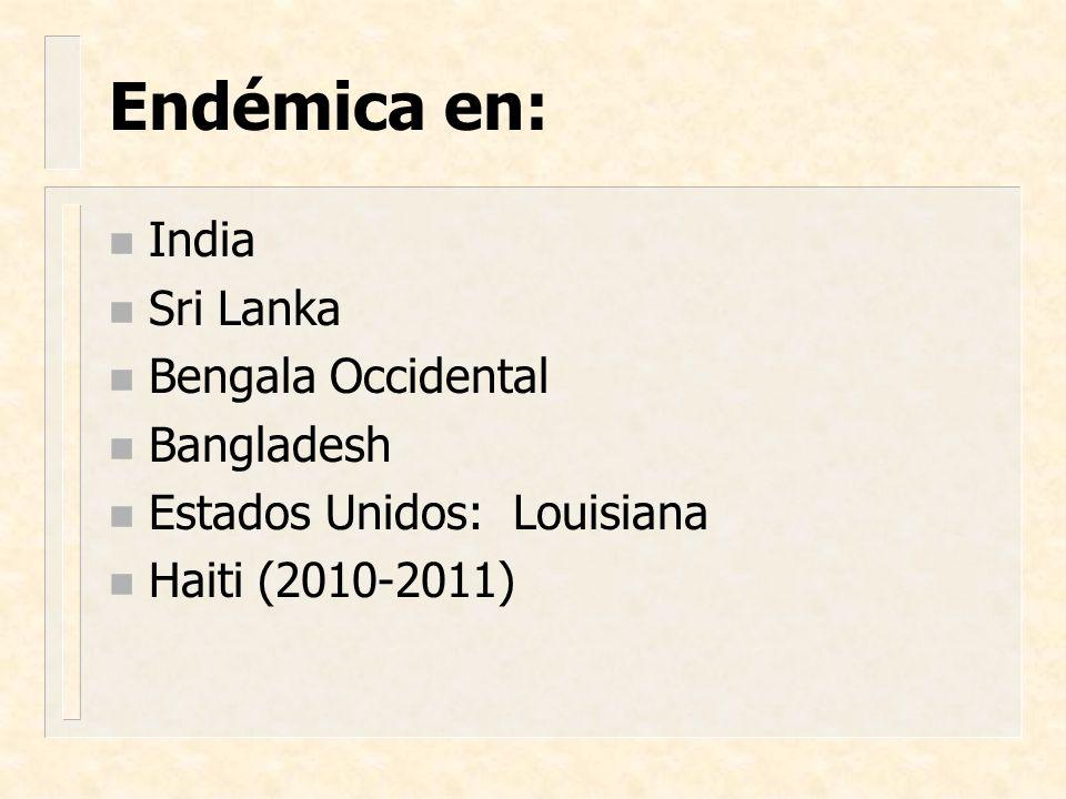 Epidemia inicial: Enero 1991 Agosto 1991 Febrero 1992 Marzo 1993 Epidemia del cólera en América