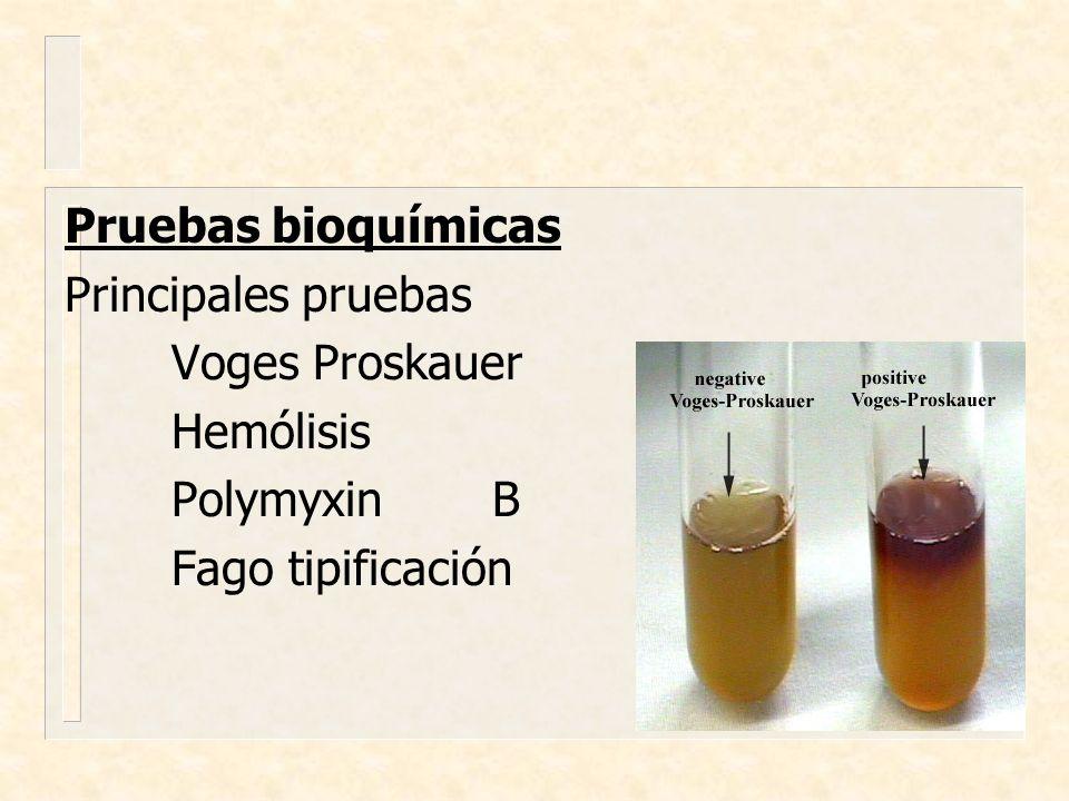 Pruebas bioquímicas Principales pruebas Voges Proskauer Hemólisis PolymyxinB Fago tipificación