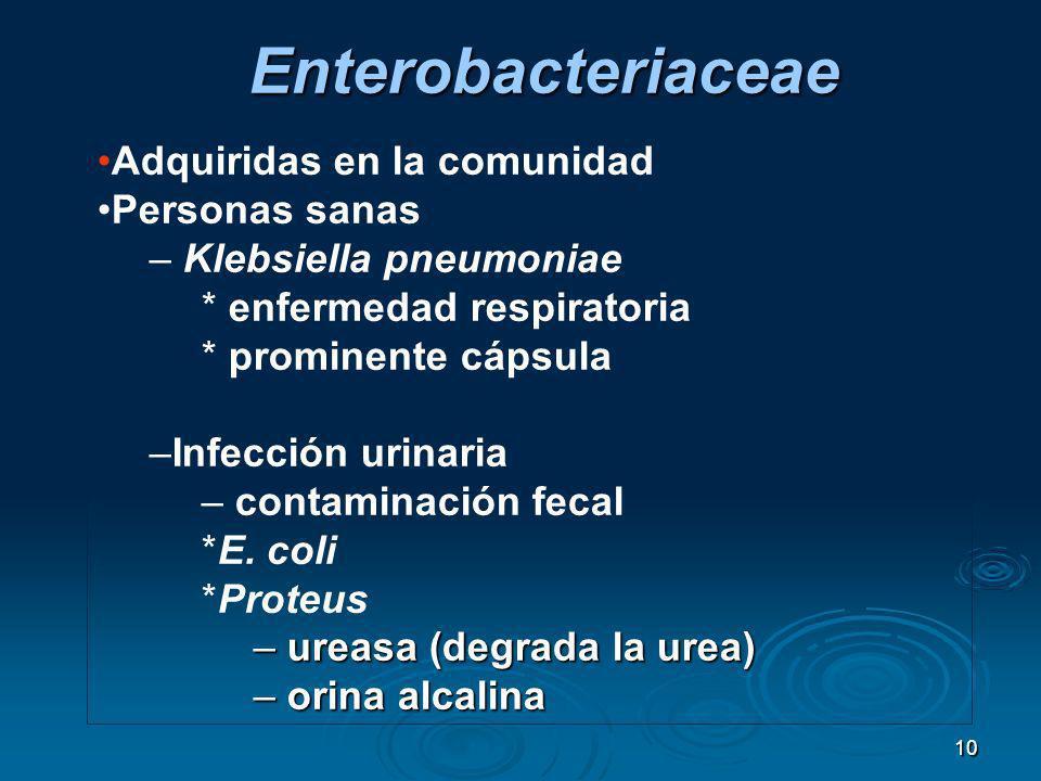 10 Adquiridas en la comunidad Personas sanas – Klebsiella pneumoniae * enfermedad respiratoria * prominente cápsula –Infección urinaria – contaminació