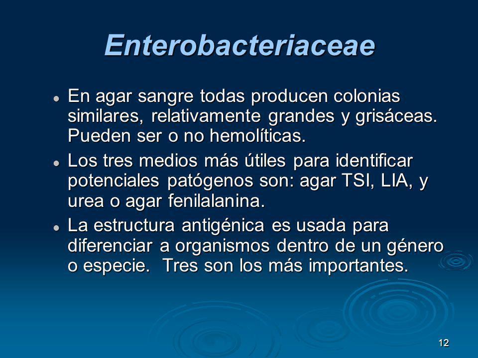 12 Enterobacteriaceae En agar sangre todas producen colonias similares, relativamente grandes y grisáceas. Pueden ser o no hemolíticas. En agar sangre
