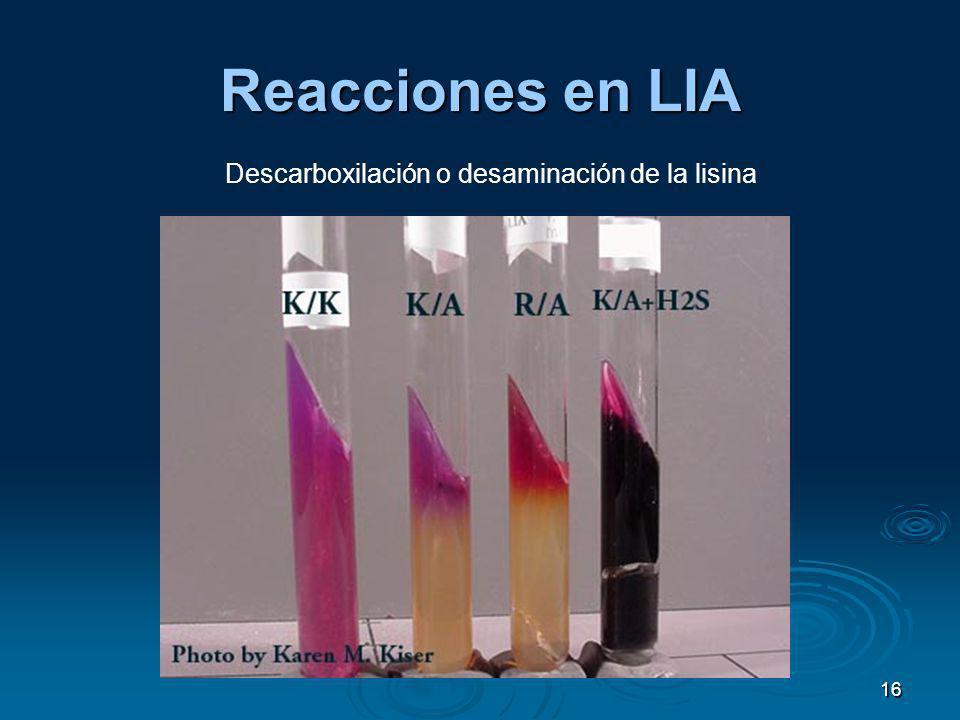 16 Reacciones en LIA Descarboxilación o desaminación de la lisina
