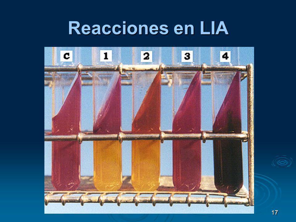 17 Reacciones en LIA