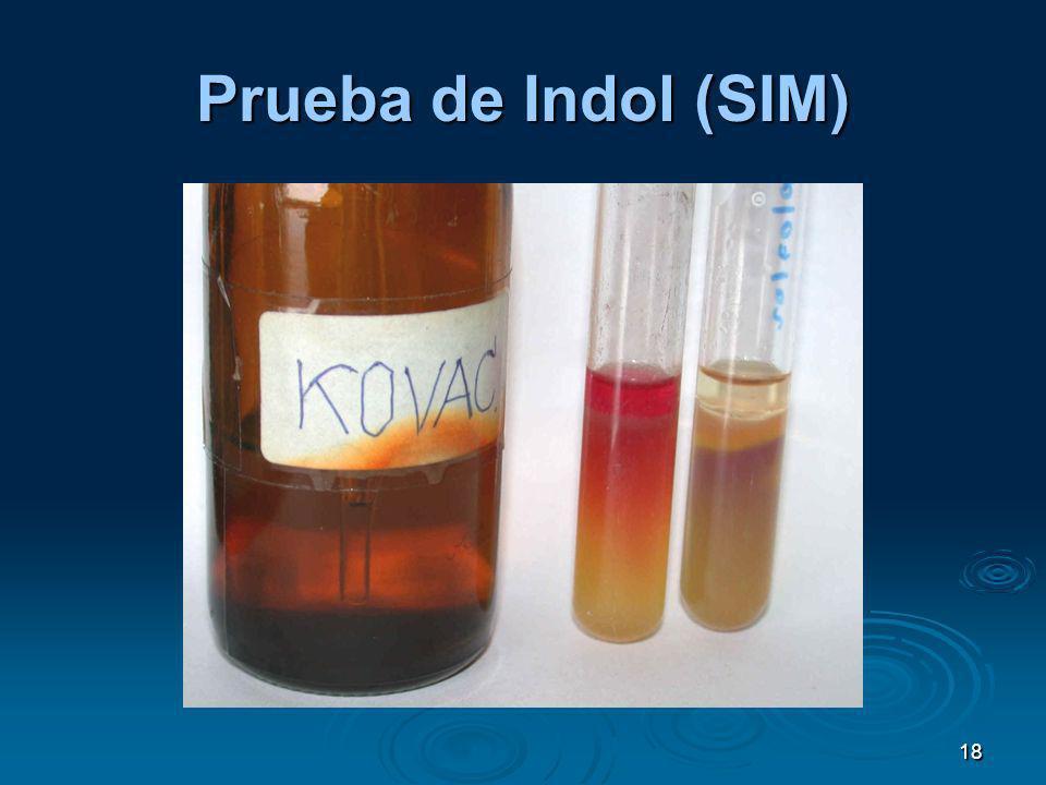 18 Prueba de Indol (SIM)