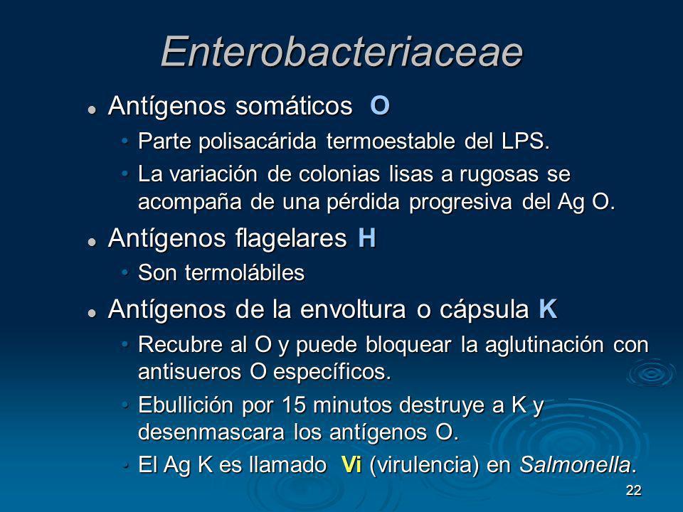 22 Enterobacteriaceae Antígenos somáticos O Antígenos somáticos O Parte polisacárida termoestable del LPS.Parte polisacárida termoestable del LPS. La