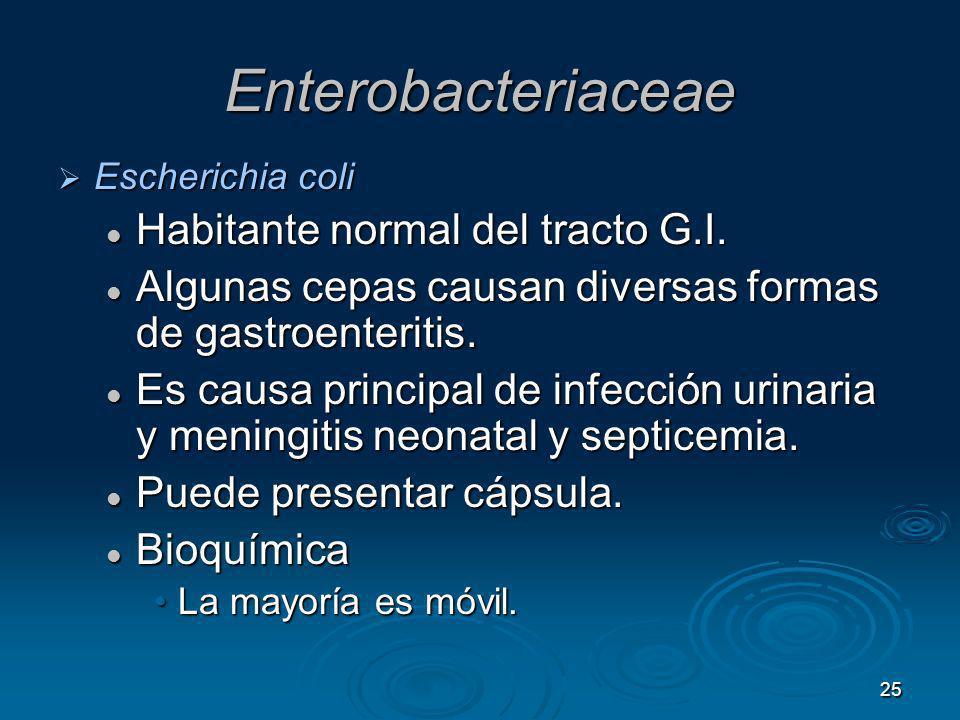 25 Enterobacteriaceae Escherichia coli Escherichia coli Habitante normal del tracto G.I. Habitante normal del tracto G.I. Algunas cepas causan diversa