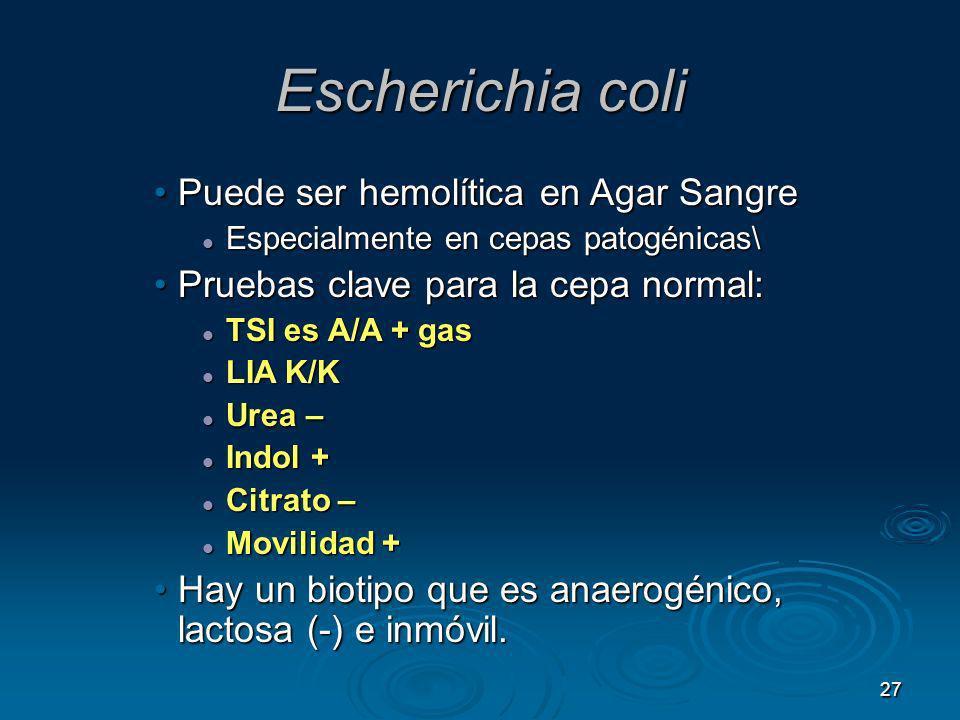 27 Escherichia coli Puede ser hemolítica en Agar SangrePuede ser hemolítica en Agar Sangre Especialmente en cepas patogénicas\ Especialmente en cepas