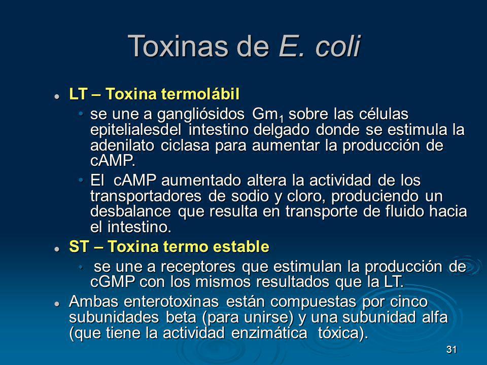 31 Toxinas de E. coli LT – Toxina termolábil LT – Toxina termolábil se une a gangliósidos Gm 1 sobre las células epitelialesdel intestino delgado dond