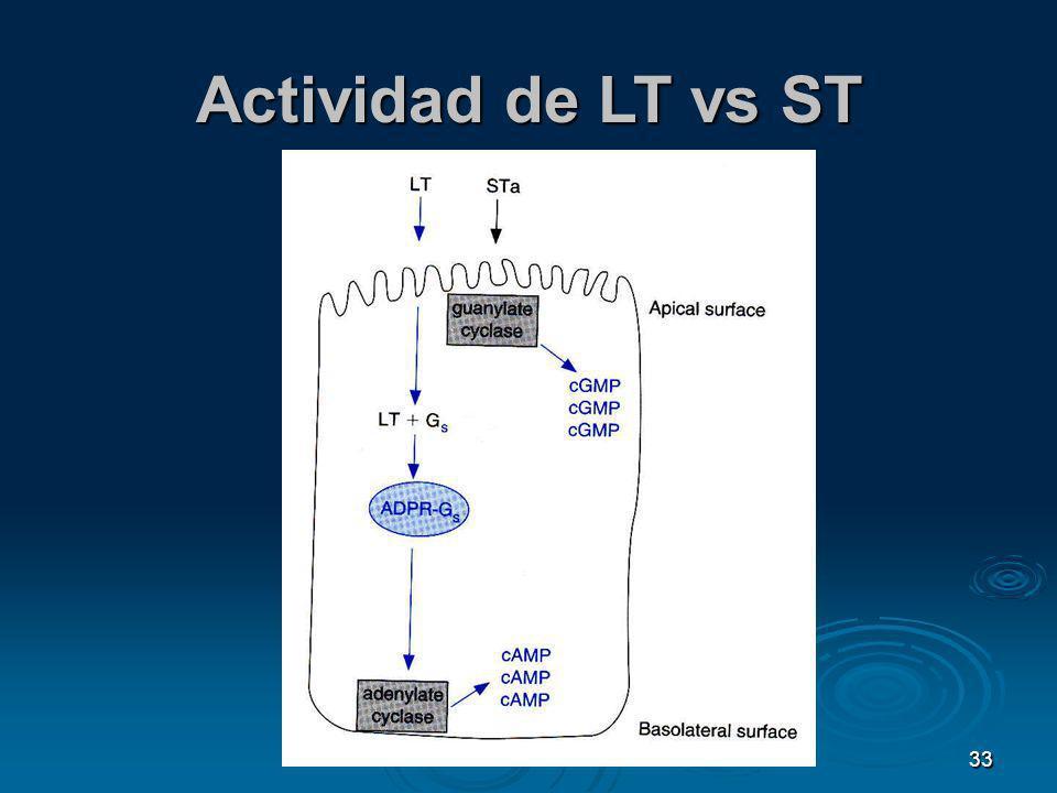 33 Actividad de LT vs ST