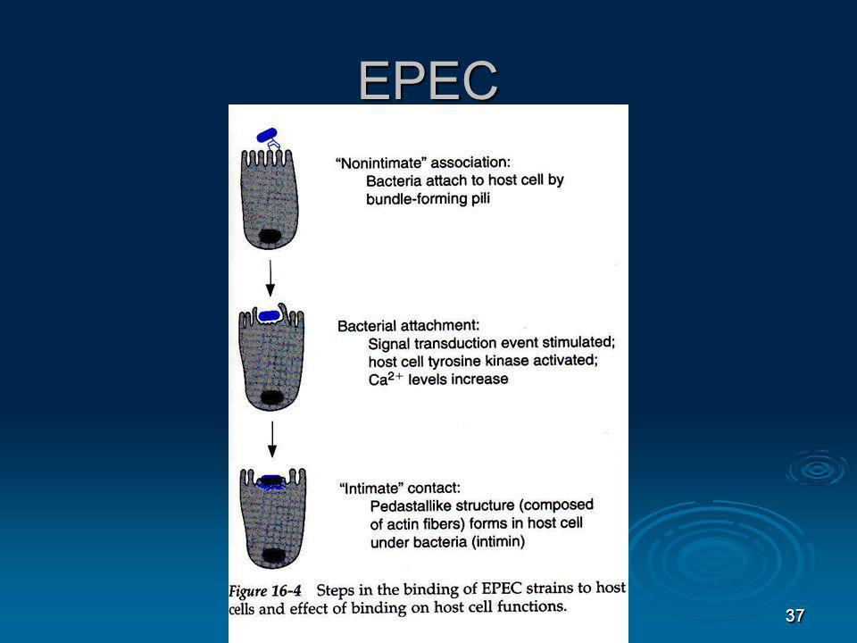 37 EPEC