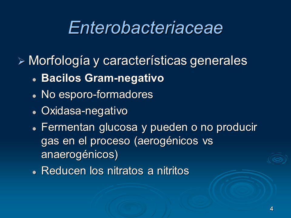 4 Enterobacteriaceae Morfología y características generales Morfología y características generales Bacilos Gram-negativo Bacilos Gram-negativo No espo