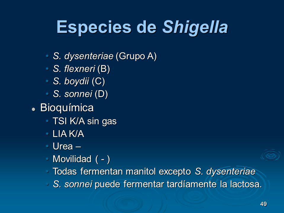 49 Especies de Shigella S. dysenteriae (Grupo A)S. dysenteriae (Grupo A) S. flexneri (B)S. flexneri (B) S. boydii (C)S. boydii (C) S. sonnei (D)S. son