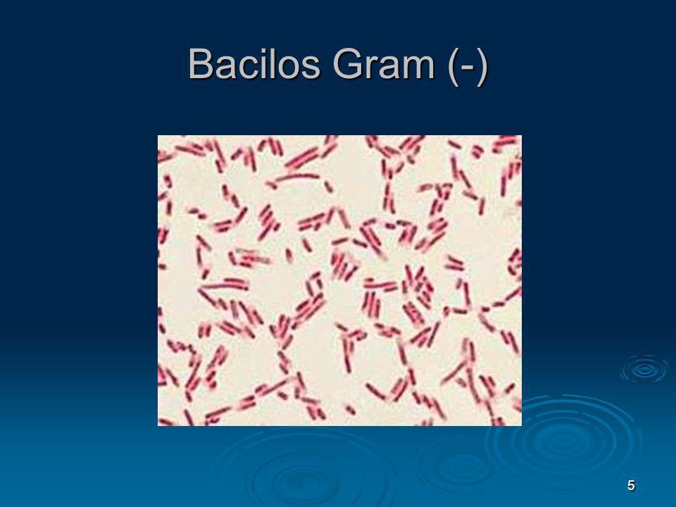 46 Resumen de las cepas de E.coli que causan gastroenteritis.