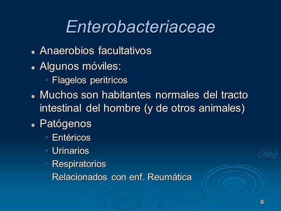 7 –septicemia –neumonía –meningitis –Infecciones del tracto urinario Citrobacter Enterobacter Escherichia Hafnia Morganella Providencia Serratia Enfermedades Oportunistas