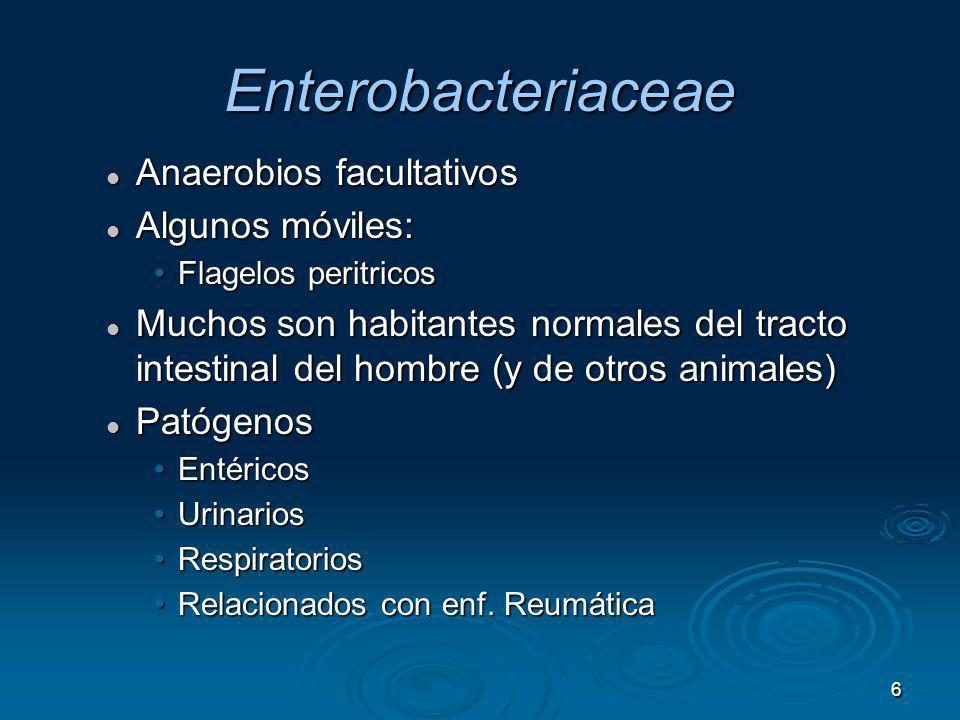 6 Enterobacteriaceae Anaerobios facultativos Anaerobios facultativos Algunos móviles: Algunos móviles: Flagelos peritricosFlagelos peritricos Muchos s