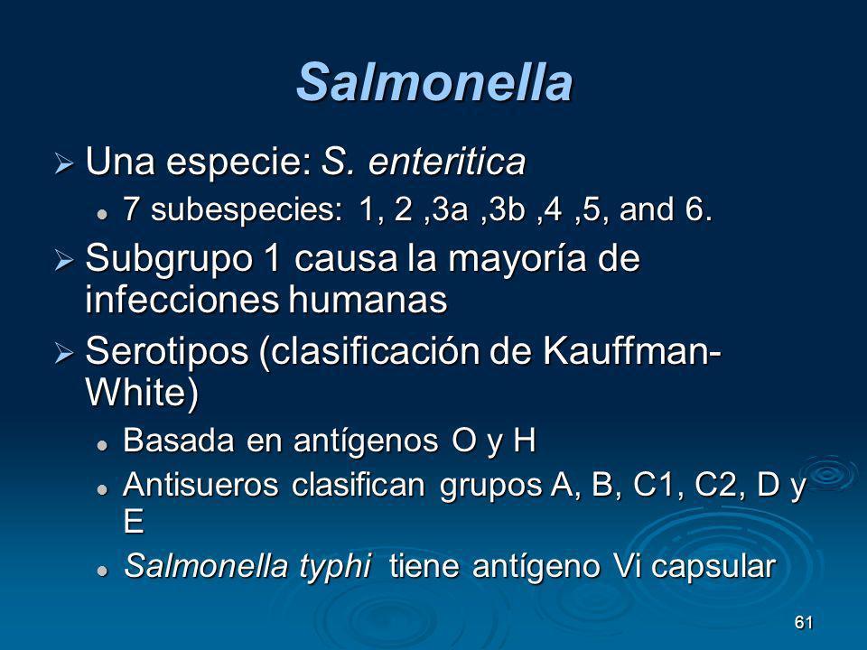 61 Salmonella Una especie: S. enteritica Una especie: S. enteritica 7 subespecies: 1, 2,3a,3b,4,5, and 6. 7 subespecies: 1, 2,3a,3b,4,5, and 6. Subgru