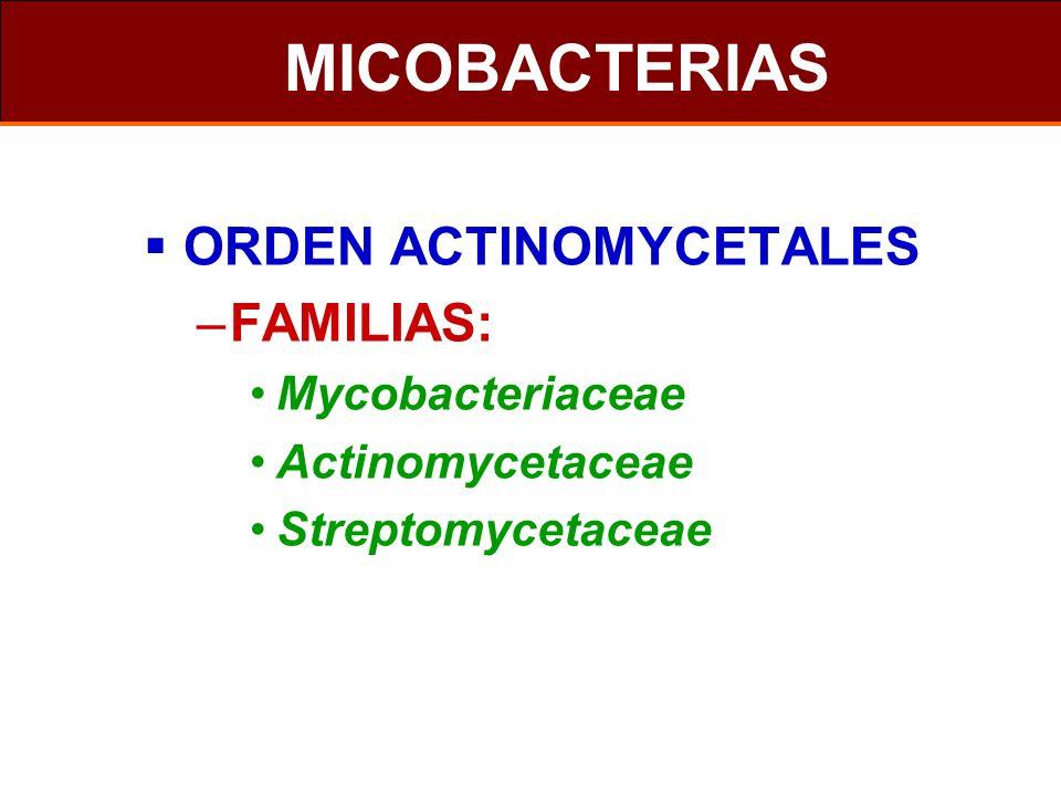 MICOBACTERIAS ORDEN ACTINOMYCETALES –FAMILIAS: Mycobacteriaceae Actinomycetaceae Streptomycetaceae