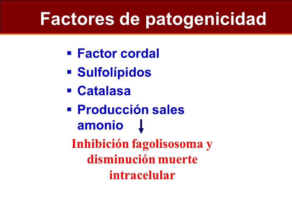Factores de patogenicidad Factor cordal Sulfolípidos Catalasa Producción sales amonio Inhibición fagolisosoma y disminución muerte intracelular