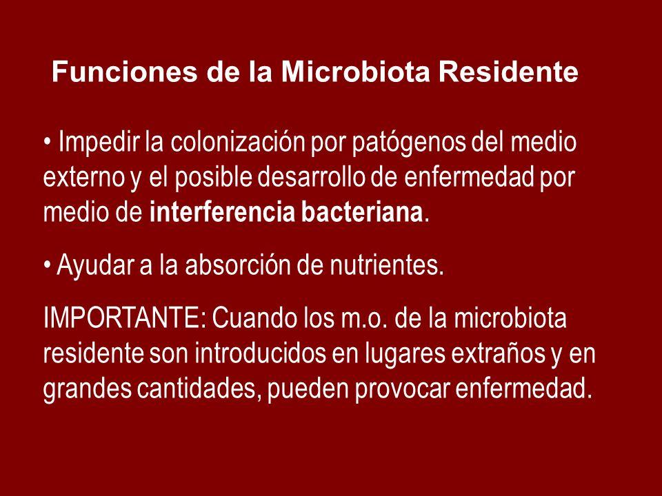 Impedir la colonización por patógenos del medio externo y el posible desarrollo de enfermedad por medio de interferencia bacteriana. Ayudar a la absor