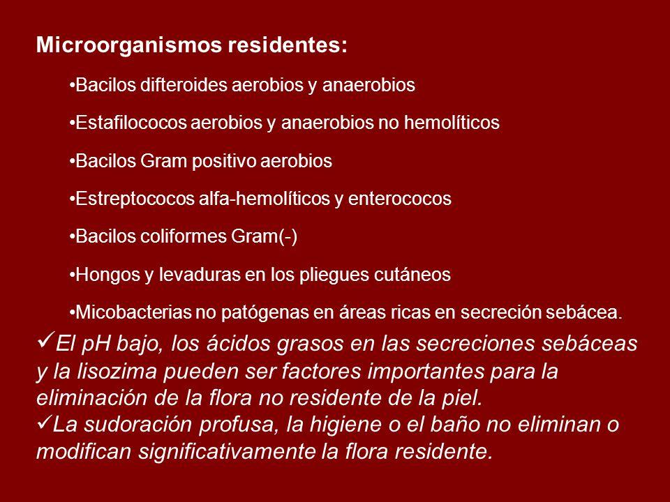 Microorganismos residentes: Bacilos difteroides aerobios y anaerobios Estafilococos aerobios y anaerobios no hemolíticos Bacilos Gram positivo aerobio
