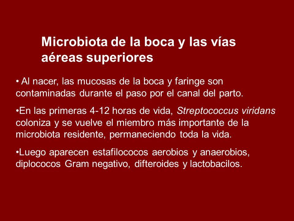 Con la dentición, aumentan en ese medio espiroquetas anaerobias, Provetella spp, Fusobacterium spp.