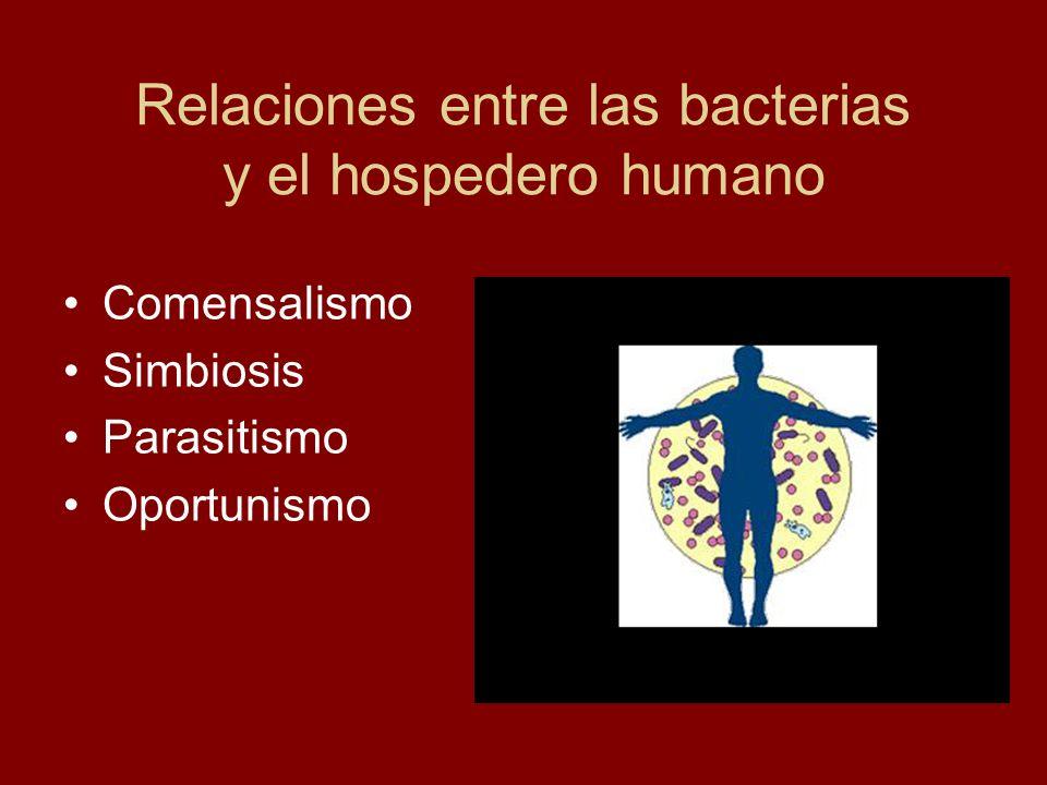 Comensalismo Com mensa compartiendo la mesa Asociación mutua entre las bacterias y organismos superiores casi sin consecuencias