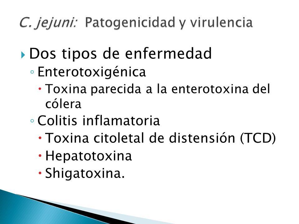 Dos tipos de enfermedad Enterotoxigénica Toxina parecida a la enterotoxina del cólera Colitis inflamatoria Toxina citoletal de distensión (TCD) Hepato