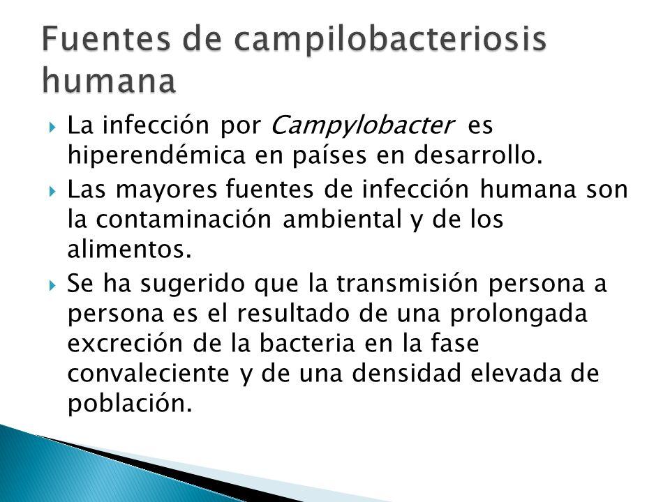 La infección por Campylobacter es hiperendémica en países en desarrollo. Las mayores fuentes de infección humana son la contaminación ambiental y de l