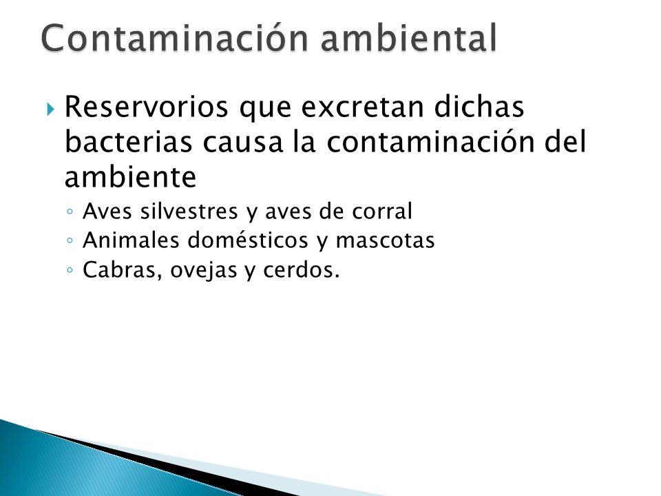 Reservorios que excretan dichas bacterias causa la contaminación del ambiente Aves silvestres y aves de corral Animales domésticos y mascotas Cabras,