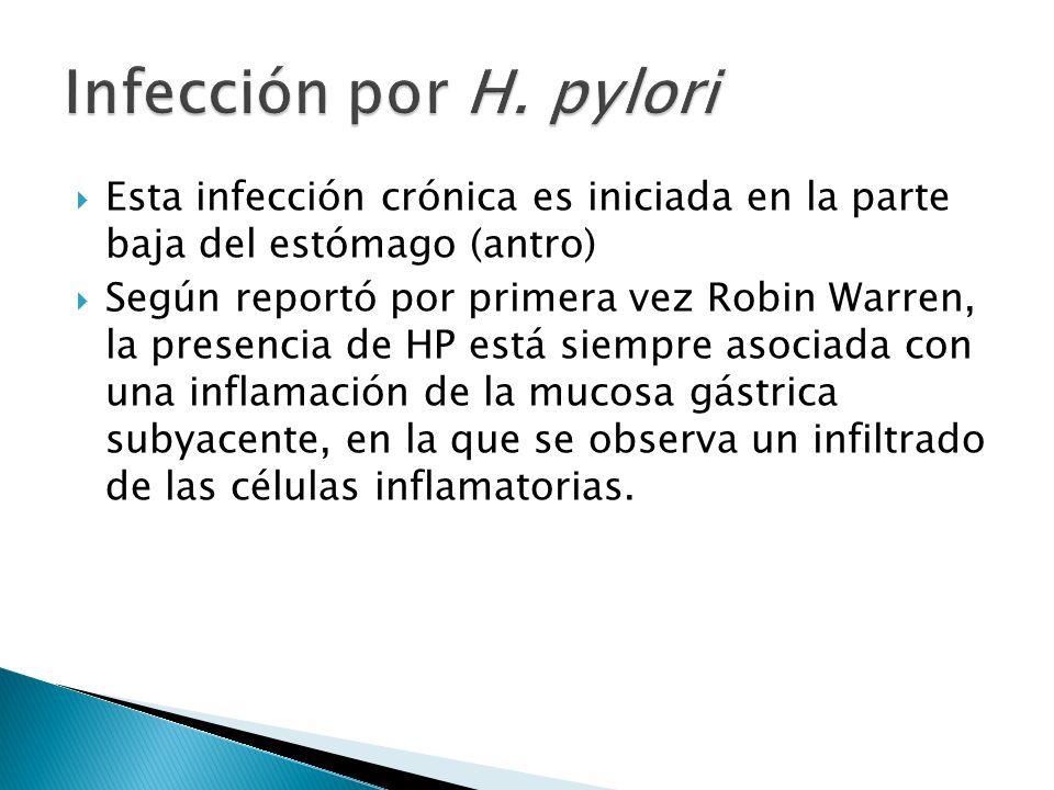 Esta infección crónica es iniciada en la parte baja del estómago (antro) Según reportó por primera vez Robin Warren, la presencia de HP está siempre a