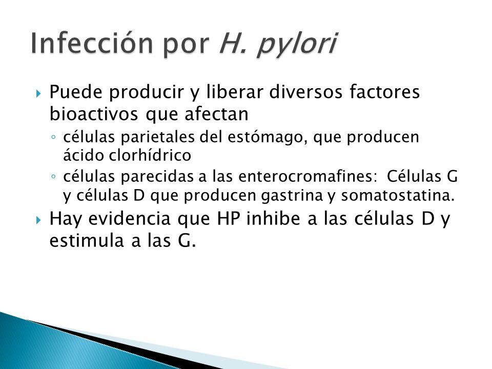 Puede producir y liberar diversos factores bioactivos que afectan células parietales del estómago, que producen ácido clorhídrico células parecidas a