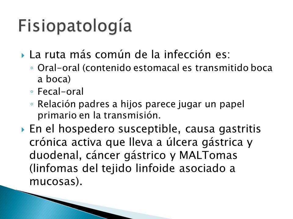 La ruta más común de la infección es: Oral-oral (contenido estomacal es transmitido boca a boca) Fecal-oral Relación padres a hijos parece jugar un pa
