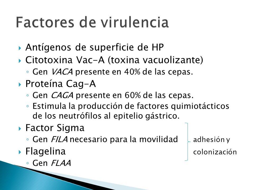 Antígenos de superficie de HP Citotoxina Vac-A (toxina vacuolizante) Gen VACA presente en 40% de las cepas. Proteína Cag-A Gen CAGA presente en 60% de
