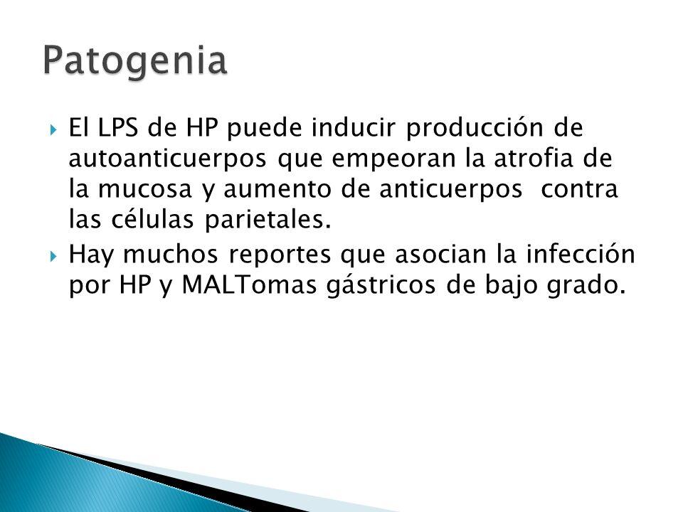 El LPS de HP puede inducir producción de autoanticuerpos que empeoran la atrofia de la mucosa y aumento de anticuerpos contra las células parietales.