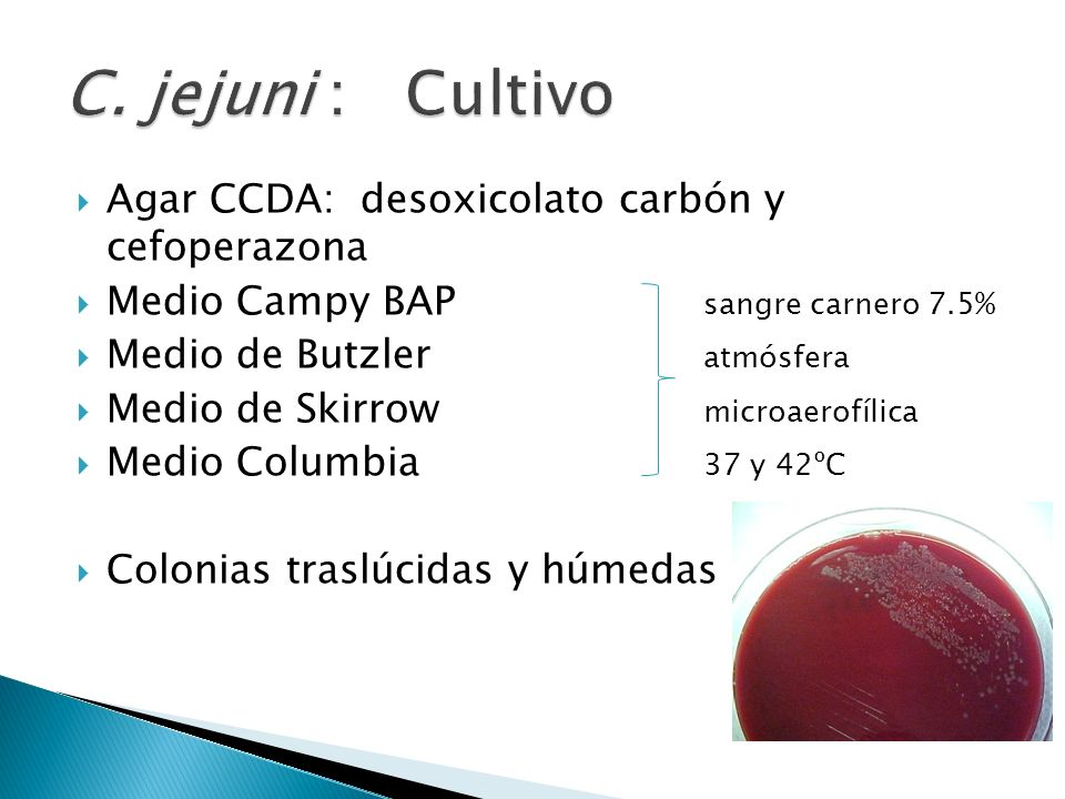 Agar CCDA: desoxicolato carbón y cefoperazona Medio Campy BAP sangre carnero 7.5% Medio de Butzler atmósfera Medio de Skirrow microaerofílica Medio Co
