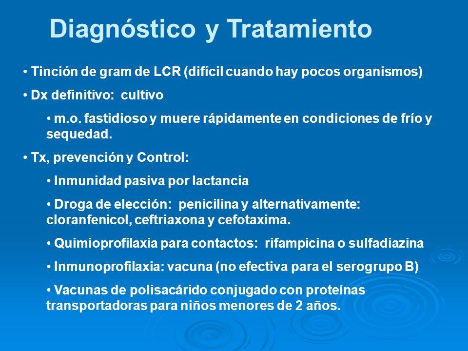 Diagnóstico y Tratamiento Tinción de gram de LCR (difícil cuando hay pocos organismos) Dx definitivo: cultivo m.o. fastidioso y muere rápidamente en c