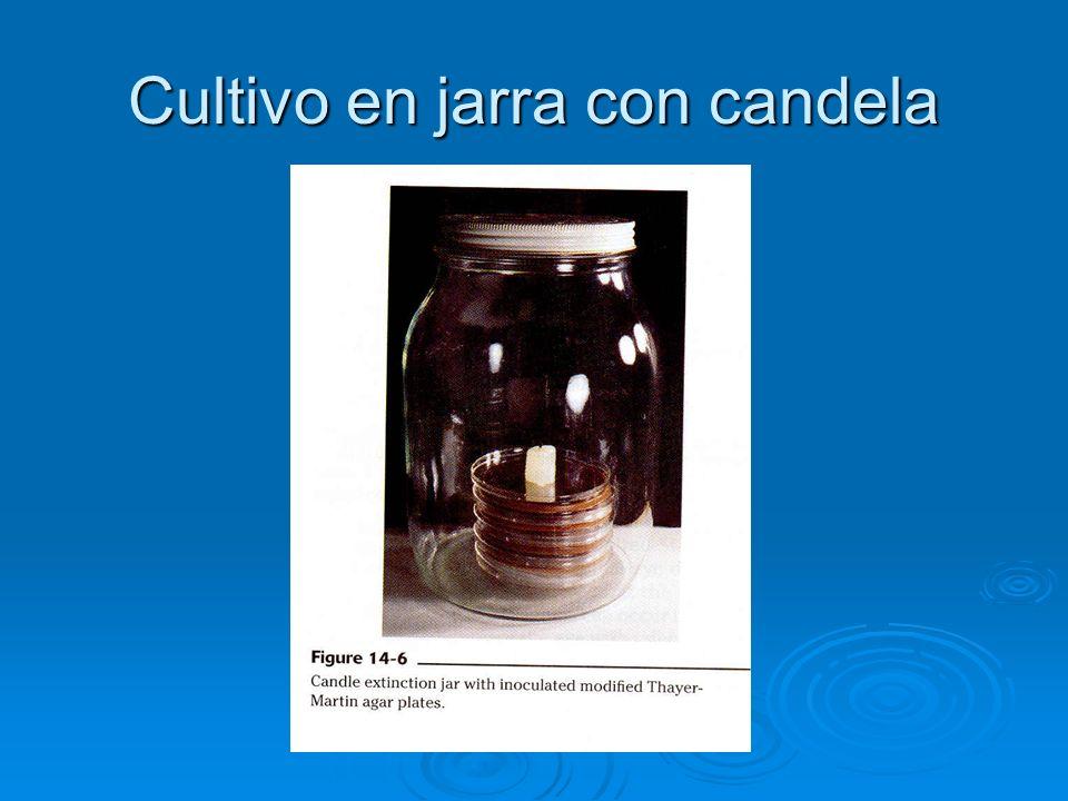 Cultivo en jarra con candela