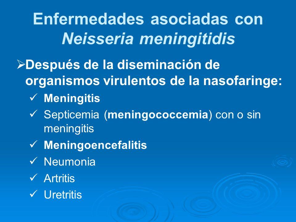 Después de la diseminación de organismos virulentos de la nasofaringe: Meningitis Septicemia (meningococcemia) con o sin meningitis Meningoencefalitis