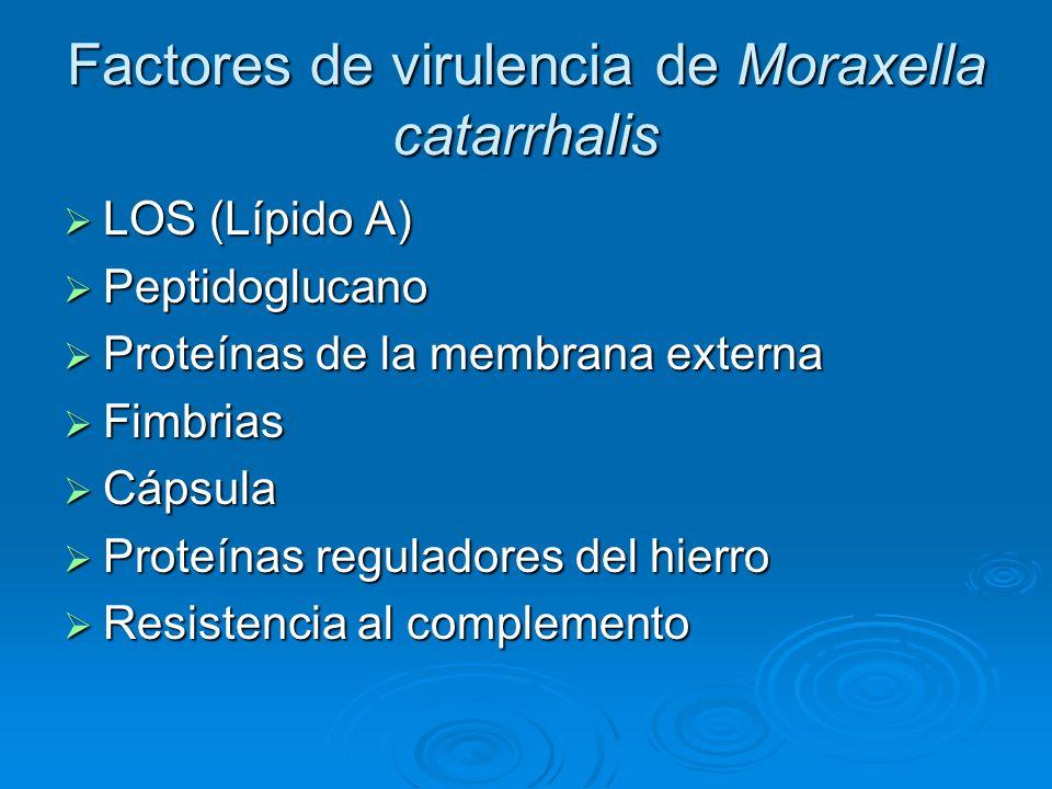 Factores de virulencia de Moraxella catarrhalis LOS (Lípido A) LOS (Lípido A) Peptidoglucano Peptidoglucano Proteínas de la membrana externa Proteínas