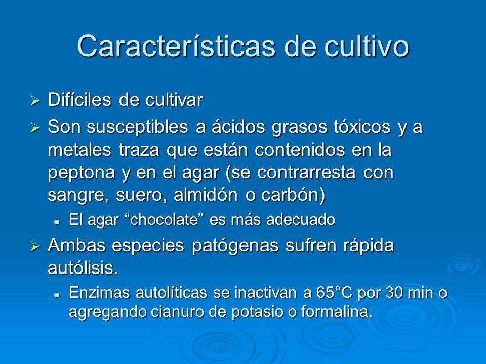 Características de cultivo Difíciles de cultivar Difíciles de cultivar Son susceptibles a ácidos grasos tóxicos y a metales traza que están contenidos