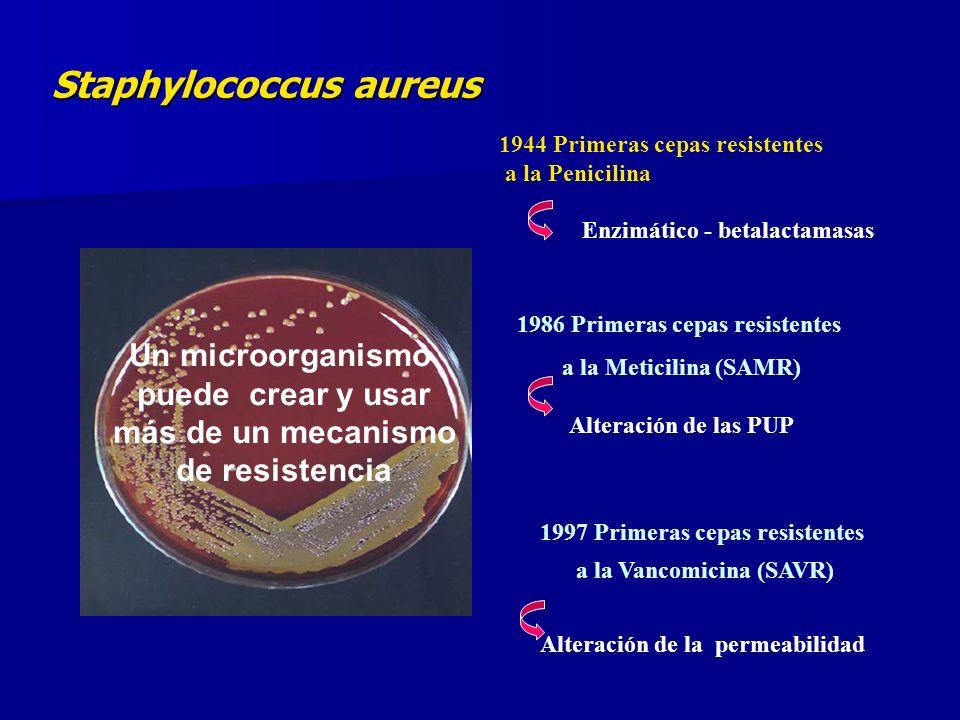 Staphylococcus aureus Un microorganismo puede crear y usar más de un mecanismo de resistencia 1944 Primeras cepas resistentes a la Penicilina Enzimático - betalactamasas 1986 Primeras cepas resistentes a la Meticilina (SAMR) Alteración de las PUP 1997 Primeras cepas resistentes a la Vancomicina (SAVR) Alteración de la permeabilidad