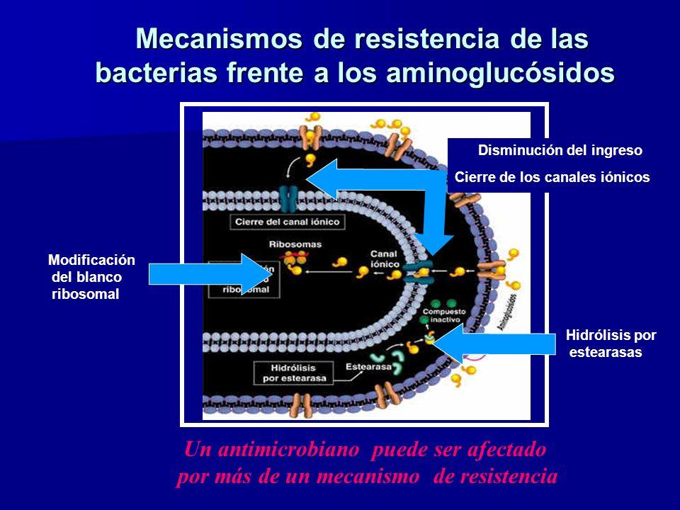 Disminución del ingreso Cierre de los canales iónicos Modificación del blanco ribosomal Hidrólisis por estearasas Mecanismos de resistencia de las bacterias frente a los aminoglucósidos Mecanismos de resistencia de las bacterias frente a los aminoglucósidos Un antimicrobiano puede ser afectado por más de un mecanismo de resistencia
