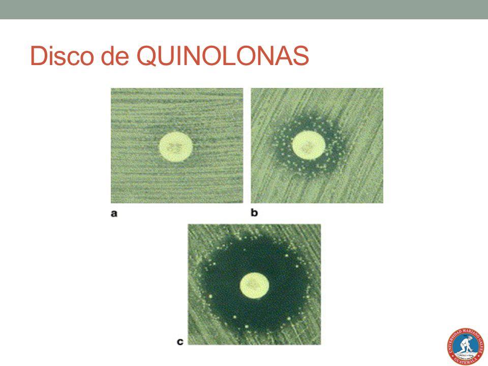 Disco de QUINOLONAS