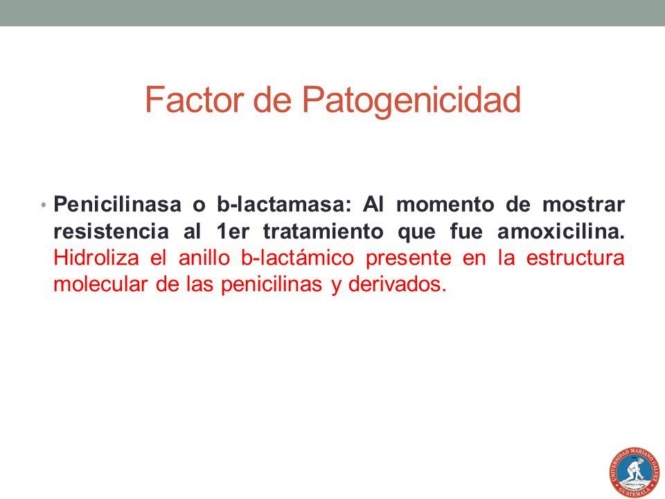 Factor de Patogenicidad Penicilinasa o b-lactamasa: Al momento de mostrar resistencia al 1er tratamiento que fue amoxicilina. Hidroliza el anillo b-la