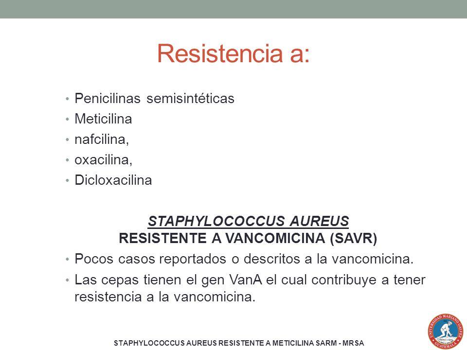 Resistencia a: Penicilinas semisintéticas Meticilina nafcilina, oxacilina, Dicloxacilina STAPHYLOCOCCUS AUREUS RESISTENTE A VANCOMICINA (SAVR) Pocos c