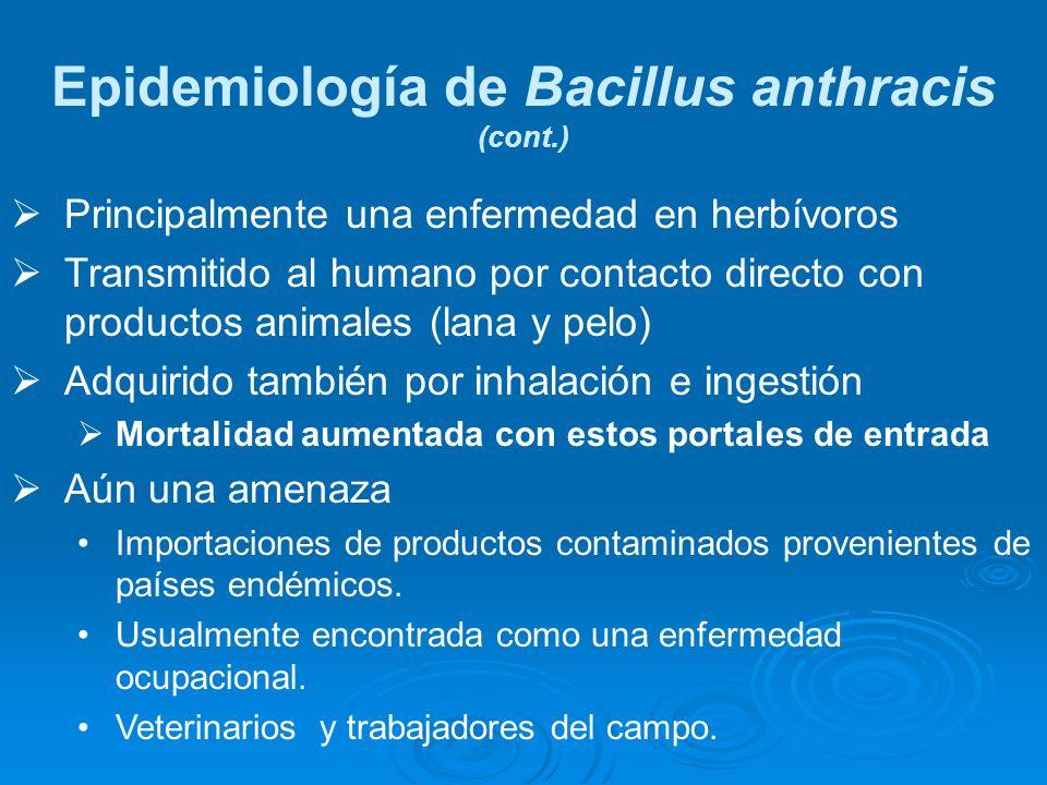 Epidemiología de Bacillus anthracis (cont.) Principalmente una enfermedad en herbívoros Transmitido al humano por contacto directo con productos anima